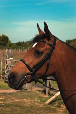 Heritage English Leather Show Bridle