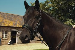 Heritage English Leather Comfort Bridle